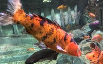 Севастопольский аквариум и лечение от наркомании в Крыму