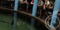 Экскурсия в Севастопольский морской Аквариум-музей во время реабилитации