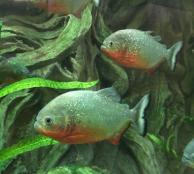 Экскурсия в аквариум и лечение наркомании в Севастополе